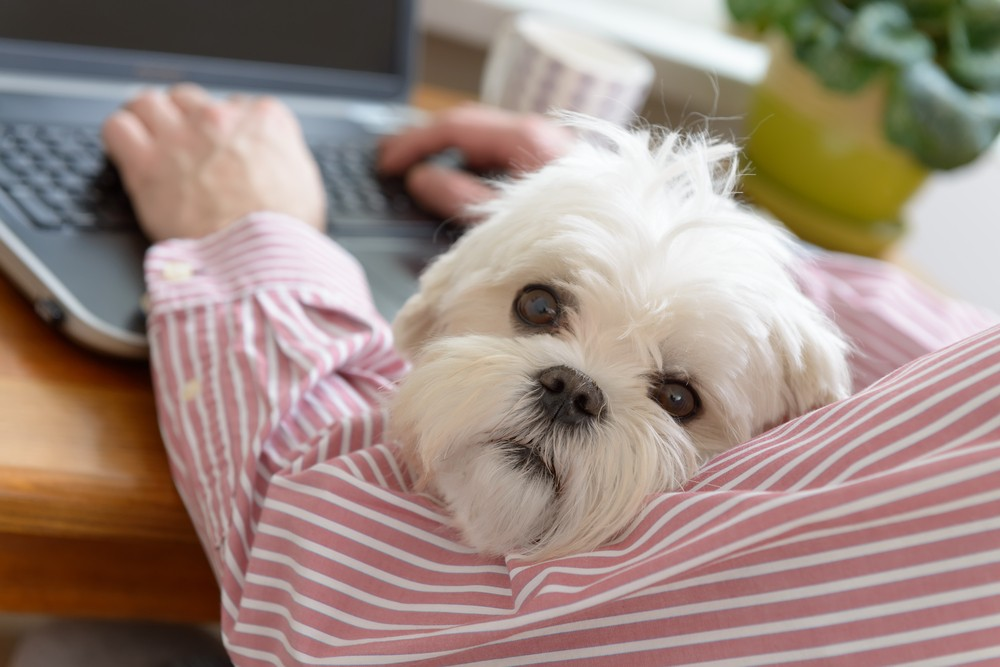 The dogs' presence is seen as a way to help boost employee productivity by relieving stress and improving the work environment. (Shutterstock/File)