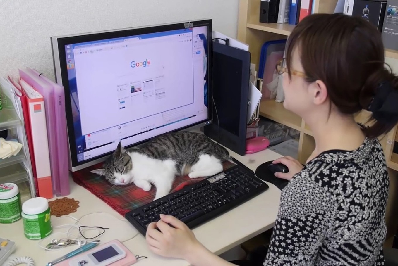A total of nine fluffy felines eat, sleep and walk freely in the small office of IT firm Ferray in Tokyo. (AFP/File)